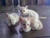 Mis pequeños gatos imagenes de archivo