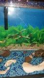 Mis pescados Imagen de archivo libre de regalías