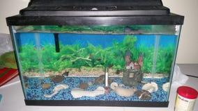 Mis pescados Foto de archivo