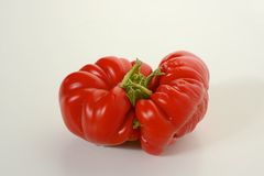 Mis-shaped red tomato. Gnarled and mis-shaped red tomato on white background Stock Images
