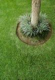 Miscanthis-sinensis mehrjährige Pflanze, die eine Grenze bildet Stockbild