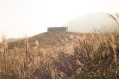 Miscanthus con la casa di pietra, picco di tramonto in Hong Kong Fotografia Stock Libera da Diritti