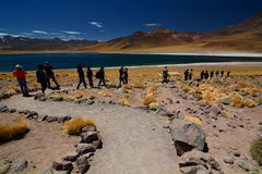 Miscanti湖的游人 Los佛拉明柯舞曲国家储备 安托法加斯塔地区 智利 库存图片