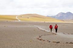 Miscanti盐水湖,智利 库存图片