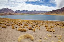 Miscanti Lagoon, Chile Stock Photography