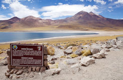 Miscanti Lagoon, Chile Royalty Free Stock Photo