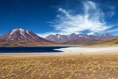 Miscanti lagun i den Atacama öknen arkivfoton