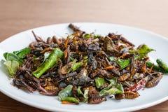 Miscela commestibile fritta degli insetti sul piatto bianco fotografia stock