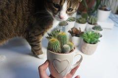 Miscela dei cactus nella stanza della luce bianca Fotografia Stock Libera da Diritti
