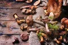 Miscela dei funghi della foresta Fotografia Stock Libera da Diritti