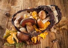 Miscela dei funghi sulle plance di legno Immagine Stock Libera da Diritti