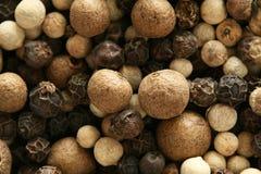 Miscela dei granelli di pepe Fotografia Stock