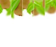 Miscela del kiwi Fotografia Stock