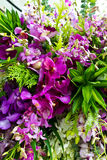 Miscela dell'accumulazione dell'orchidea Immagine Stock Libera da Diritti