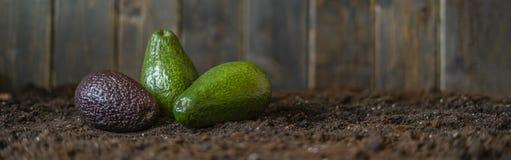 Miscela dell'avocado sulla disposizione piana f di messa a terra scura del suolo fotografia stock