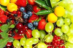 Miscela della frutta e delle bacche Fotografia Stock