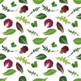 Miscela delle foglie dell'insalata Rucola, spinaci, foglia della lattuga, crescione e radicchio Reticolo senza giunte Illustrazio illustrazione vettoriale