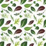 Miscela delle foglie dell'insalata Rucola, spinaci, foglia della lattuga, crescione e radicchio Reticolo senza giunte Illustrazio royalty illustrazione gratis
