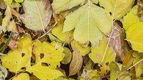 Miscela delle foglie di autunno cadute immagini stock