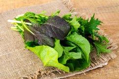 Miscela delle foglie fresche dell'insalata dei colori differenti Immagine Stock Libera da Diritti