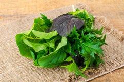 Miscela delle foglie fresche dell'insalata dei colori differenti Immagine Stock