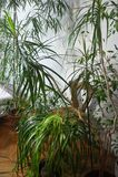 Miscela delle piante da appartamento nella stanza Fotografia Stock Libera da Diritti