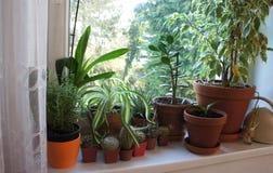 Miscela delle piante da appartamento sulla finestra Immagine Stock Libera da Diritti