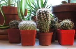 Miscela delle piante da appartamento sulla finestra Immagini Stock Libere da Diritti