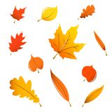 Miscellaneous fall leaves. Miscellaneous orange fall leaves isolated on white Stock Photo