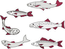 Miscellaneous fish Royalty Free Stock Images