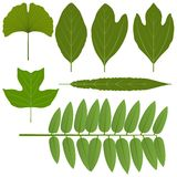Miscellaneous leaves Royalty Free Stock Images