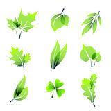 Green summer leaves icons Stock Photo