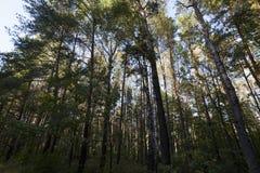 Misch- und schlecht beleuchteter Wald stockbild