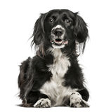 Misch-Zuchthund, 10 Jahre alt, lokalisiert auf Weiß Stockfoto