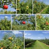 Mischcollage der Details der Äpfel Stockbild