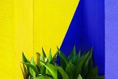 Mischen des gelben und blauen Erzeugnisgrüns Stockfoto