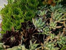 Mischen Sie saftige Anlagen am Garten lizenzfreie stockfotografie