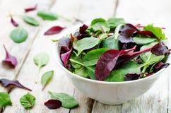 Mischen Sie Salat Sommerendivie, Arugula, Spinat, mizuna, Mangoldgemüse, Eichensalat stockbild
