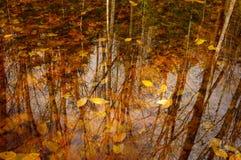 Mischhartholz Forest Reflected In ein frühlingshafter Teich im Adironda Lizenzfreies Stockfoto