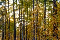 Mischherbstwald Stockfoto
