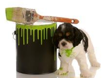 Mischievous puppy stock photography