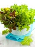 Mischkopfsalat in einer Schüssel Lizenzfreie Stockbilder
