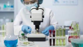 Mischrassewissenschaftler-Betrachtungsproben von Mikroorganismen im Mikroskop, Analyse lizenzfreie stockbilder
