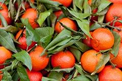 Mischung der Orangen und der Blätter lizenzfreies stockbild