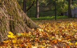 Mischung des Herbstlaubs mit großer Strecke der Farben Lizenzfreie Stockbilder