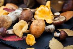 Mischung von essbaren Pilzen des Herbstes wilder Wald lizenzfreie stockfotografie