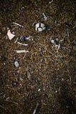Mischung von Feldgegenständen, von Steinen, von dunkler Erde, von Stöcken und von Baumasten stockbild