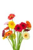 Mischung von gerber Blumen lizenzfreie stockfotografie