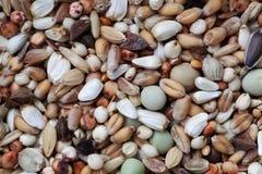 Mischung von Körnern und von Samen stockfoto