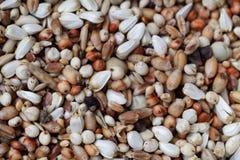 Mischung von Körnern und von Samen lizenzfreie stockfotografie